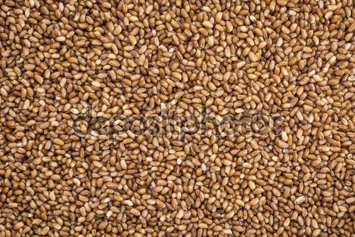 gluten free teff grain background - important food grain in Ethiopia and Eritrea, life size macro