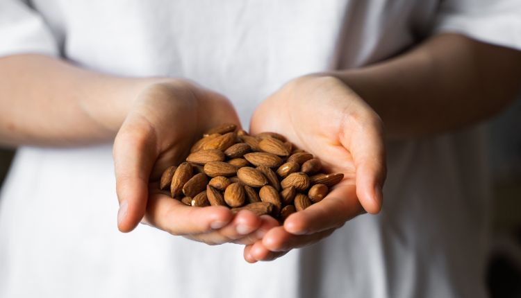 Almond in a womans hands. Almonds nuts is a healthy vegetarian protein and nutritious food. Nuts in a humans hand.
